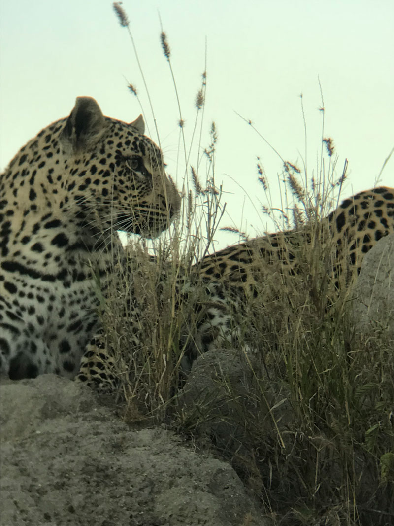 Leopard Client Feedback