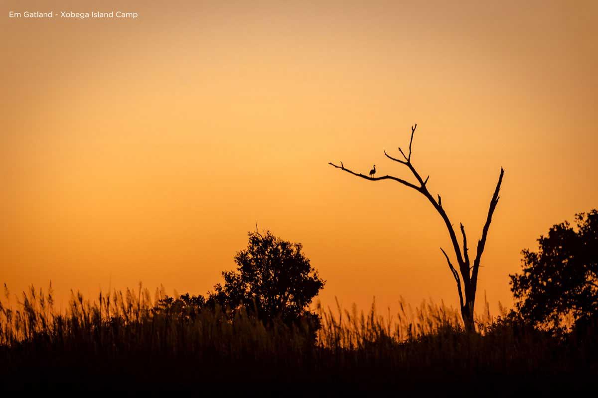 Orange sky Okavango Delta