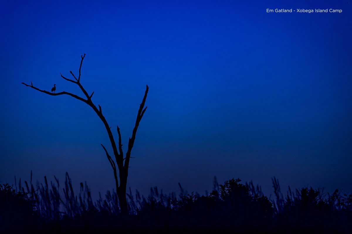 Midnight Blue Okavango Delta