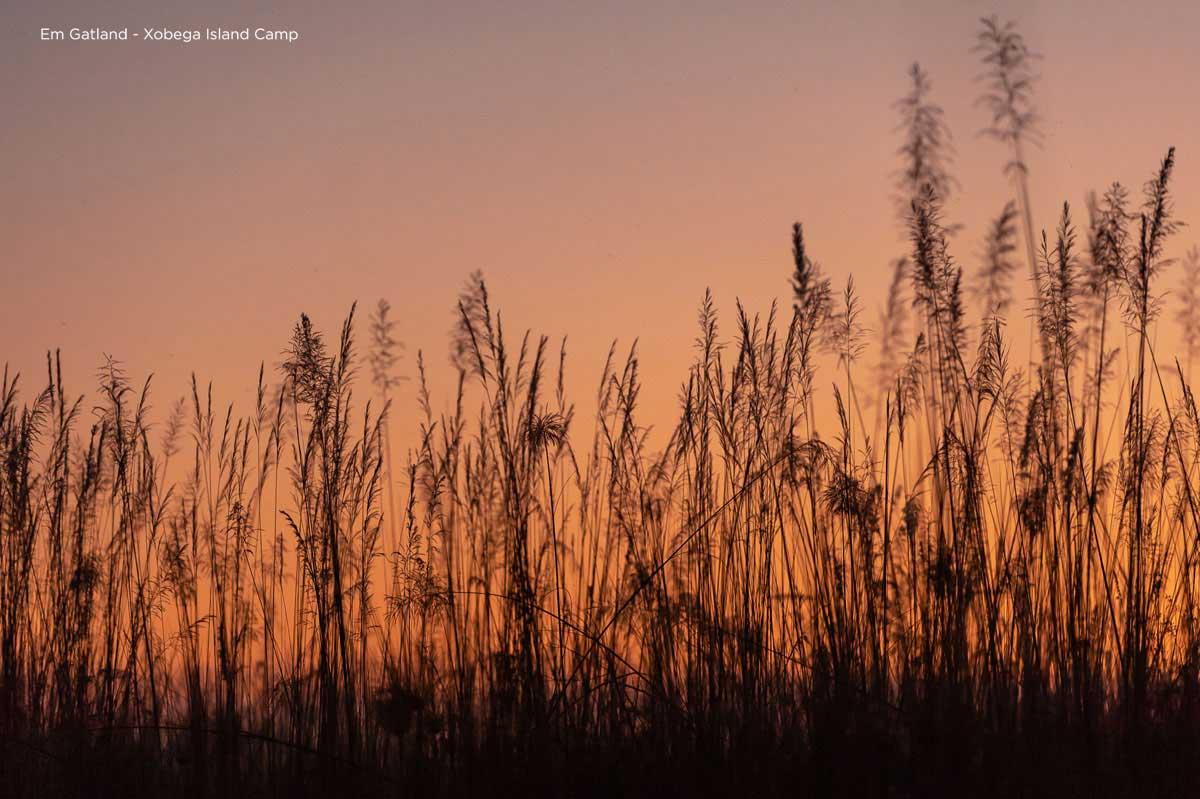 Reed Lined Okavango Delta