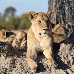 Client Feedback : Exceptional Okavango Delta Safari