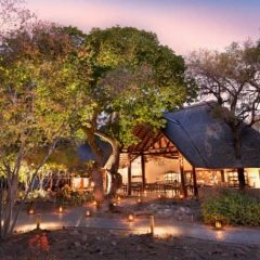 Client Feedback : Ngala Safari Lodge and Africa on Foot Wilderness Trails