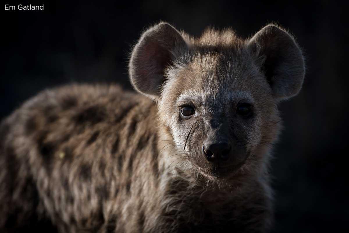 Hyena - Em Gatland