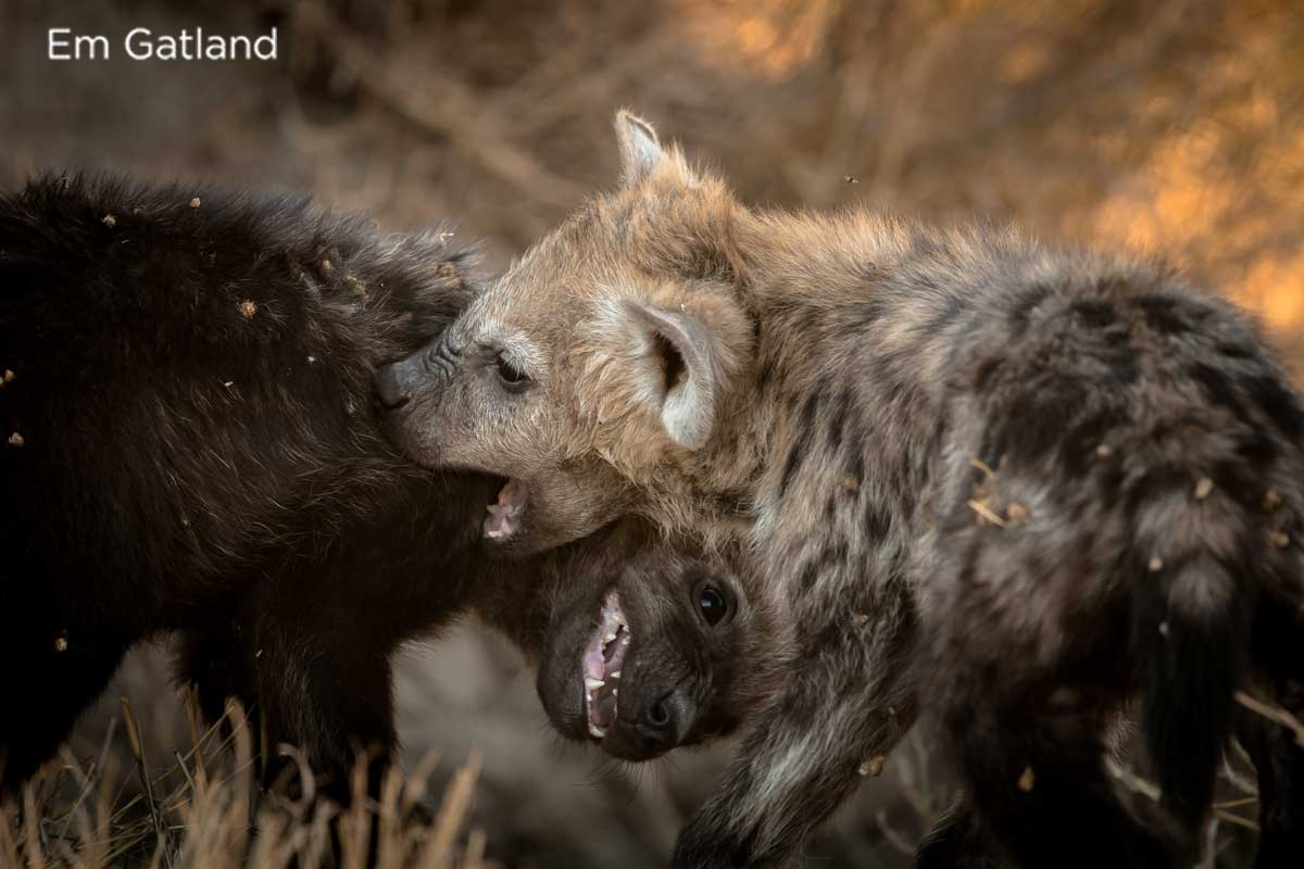 Hyena Cubs - Em Gatland