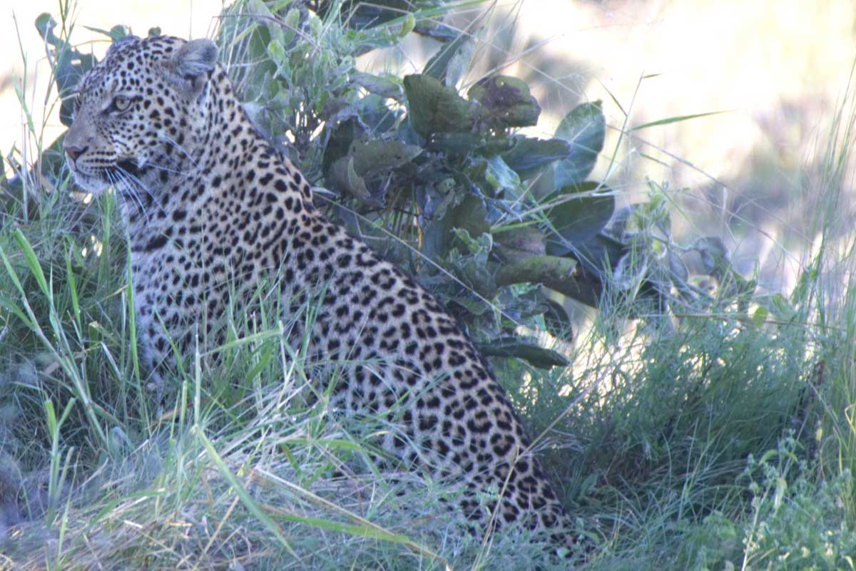 Photographic Journey, Client Feedback : A Photographic Journey Through Botswana