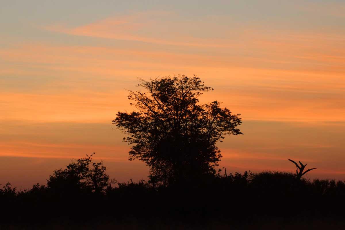 Sunset in Savuit Region of Chobe - Nik Simpson