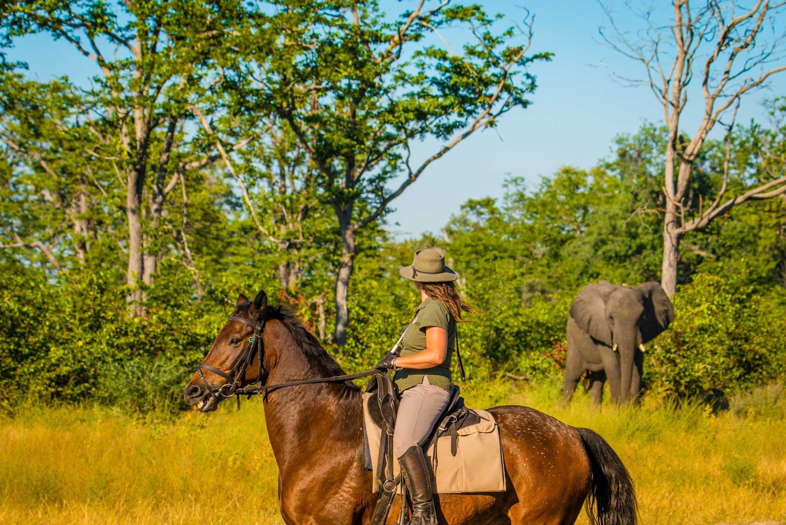 Selinda reserve, Uncovering the Secrets of Selinda
