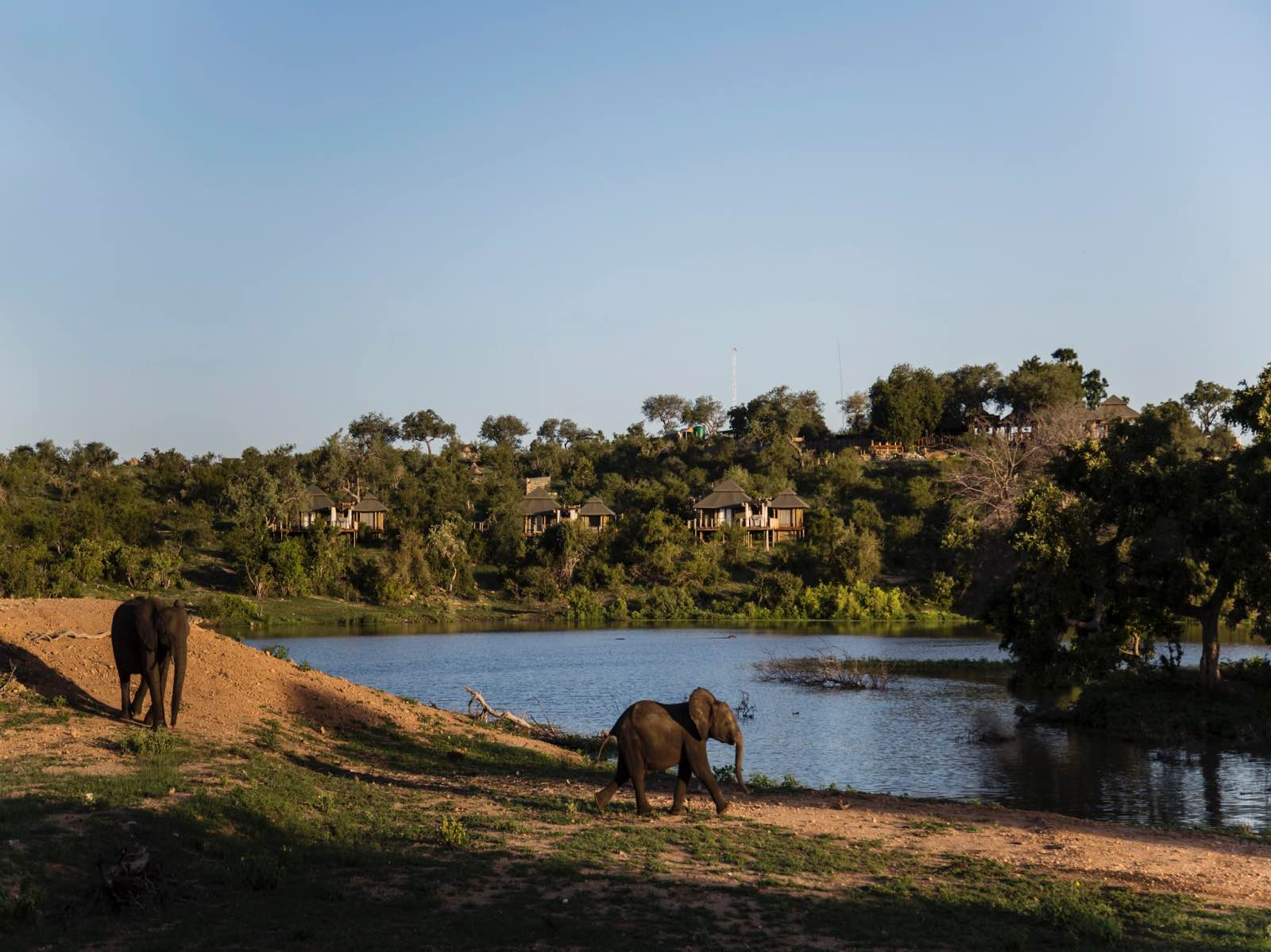 Simbavati Hilltop Lodge positioned between the trees on the raised koppie overlooking the water and elephants