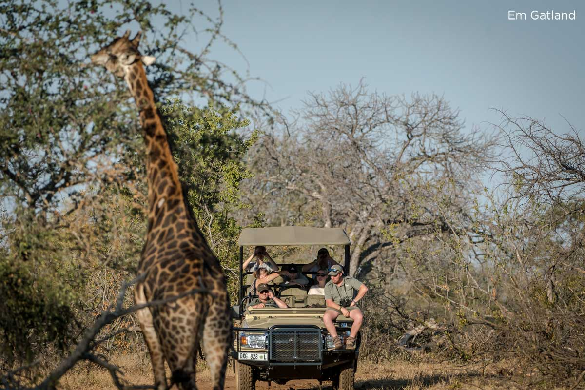 South African safari, 4 Things Synonymous with a South African Safari