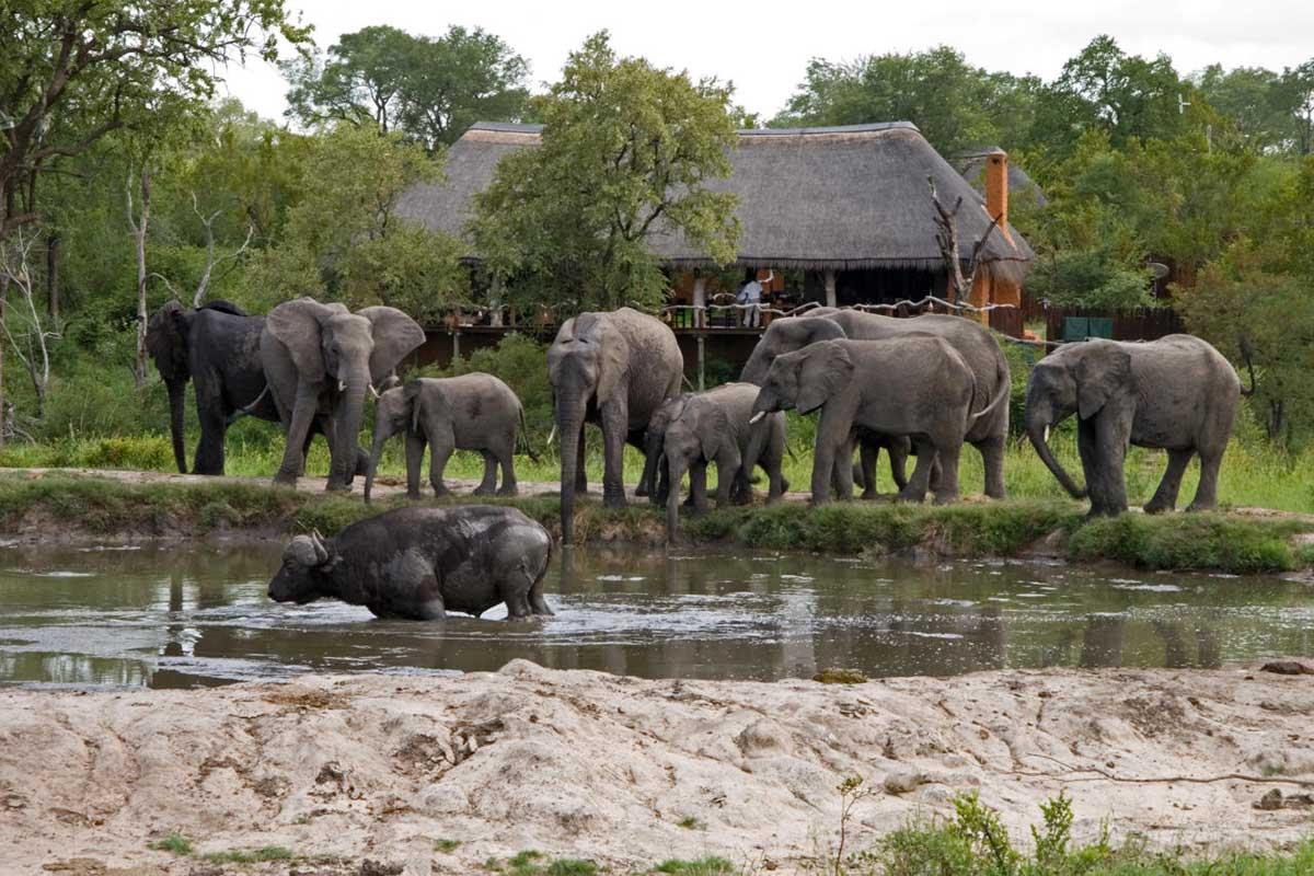 Simbambili Waterhole