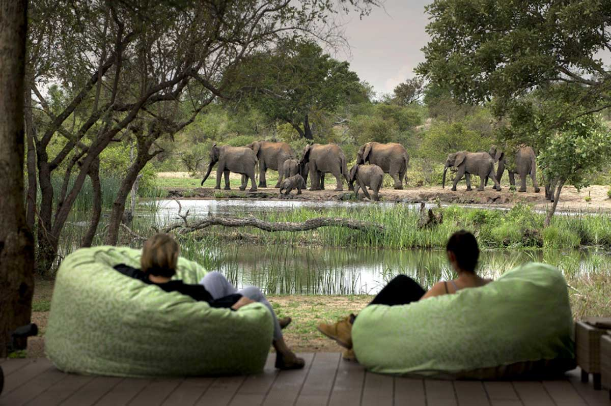 Tanda Tula Views of Elephants at Waterhole