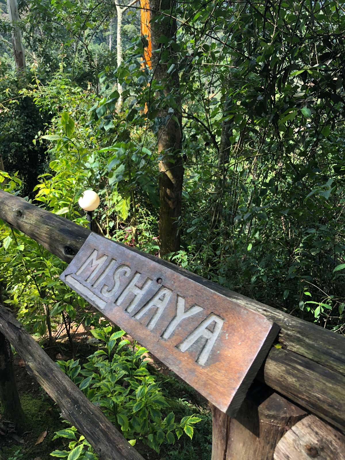 Gorilla Group in Uganda
