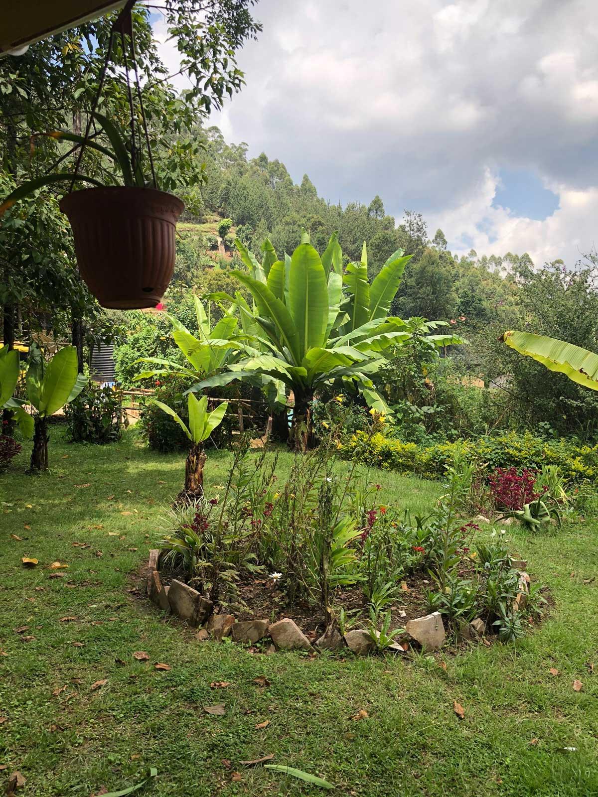 View from Gorilla Safari Lodge