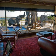 Expert Advice: 10 Best Safari Camps in Botswana
