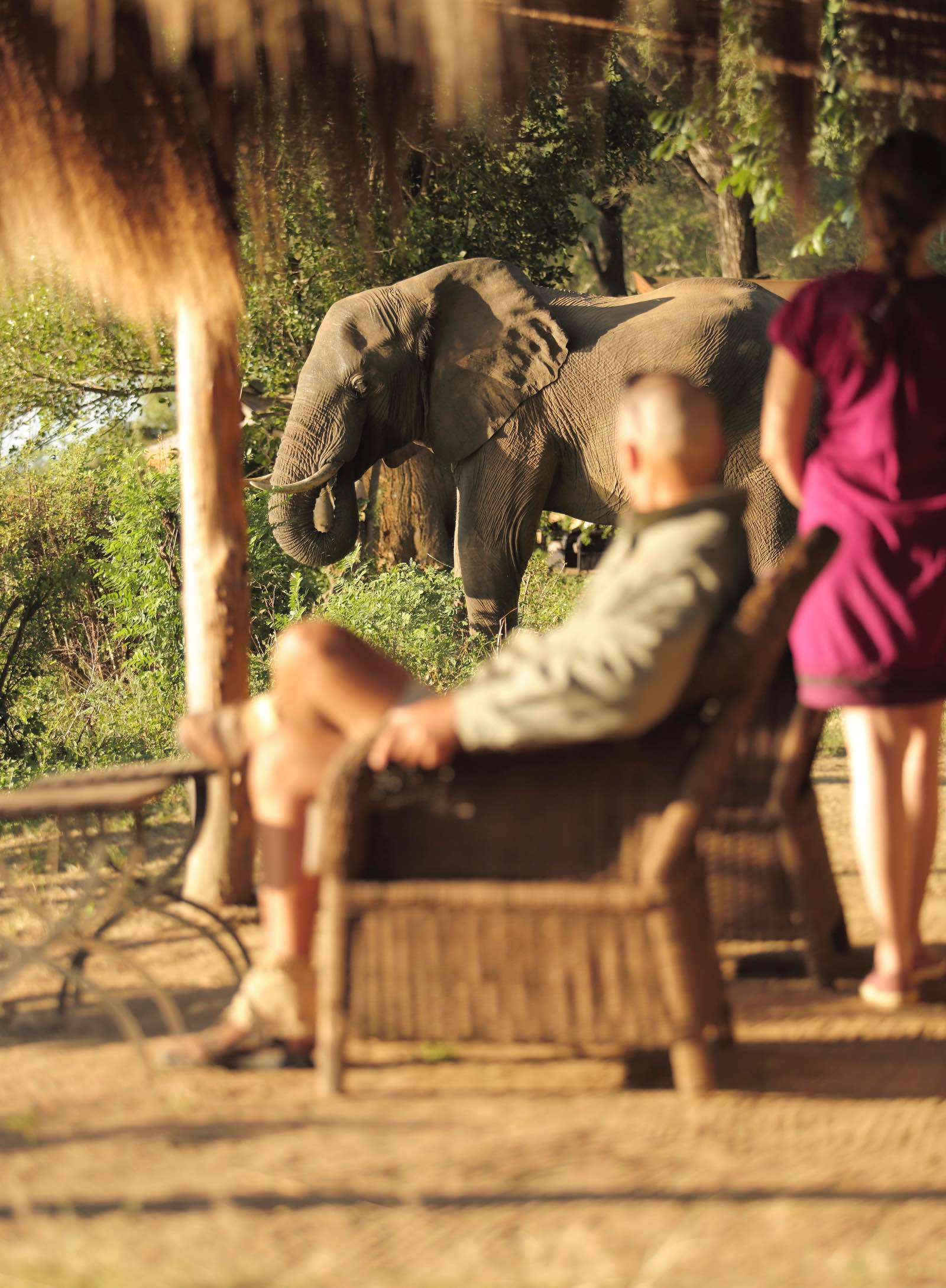 Elephants wander into camp at Chongwe River Camp2