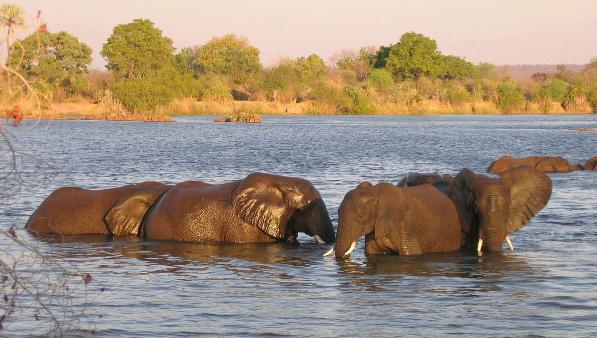 Lake Kariba Elephants