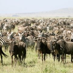 Iconic Destinations in Kenya, the Jewel of Africa
