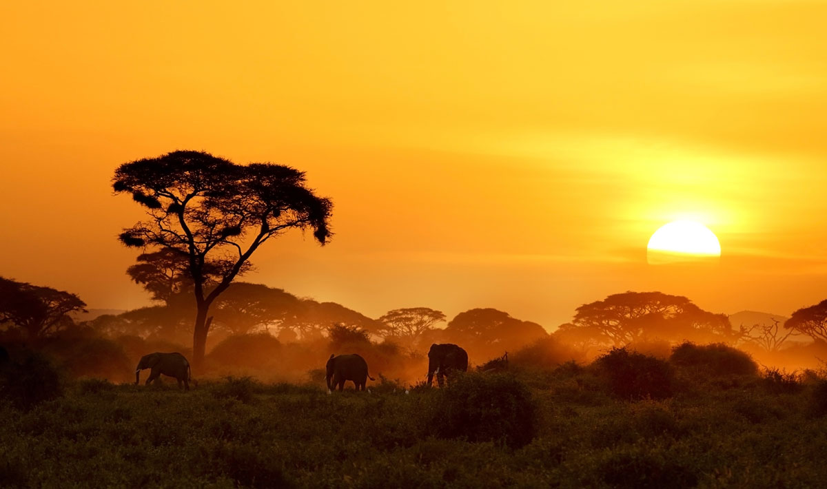 Which is best for a safari – Botswana, South Africa or East Africa?