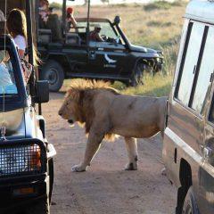 Client Feedback : Kichwa Temba in Masai Mara