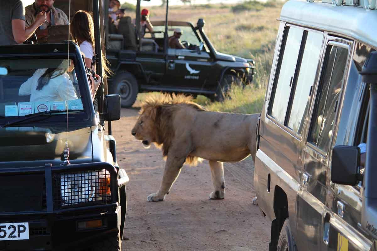 Masai Mara Lions and Game Viewer