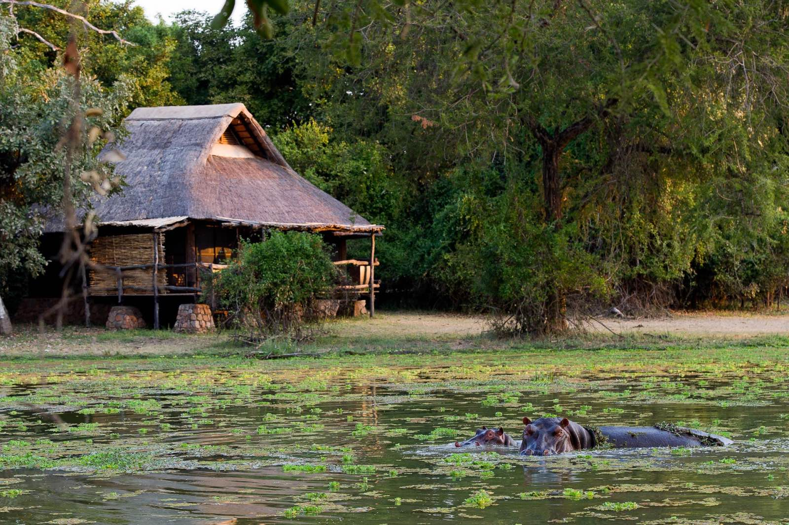 Stilted thatched chalets overlook the swamp, which is frequently visited by wildlife and birds