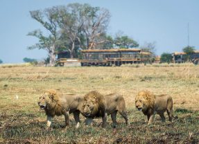 Our Travel Expert's Top 10 Rated Zambia Safari Accommodations