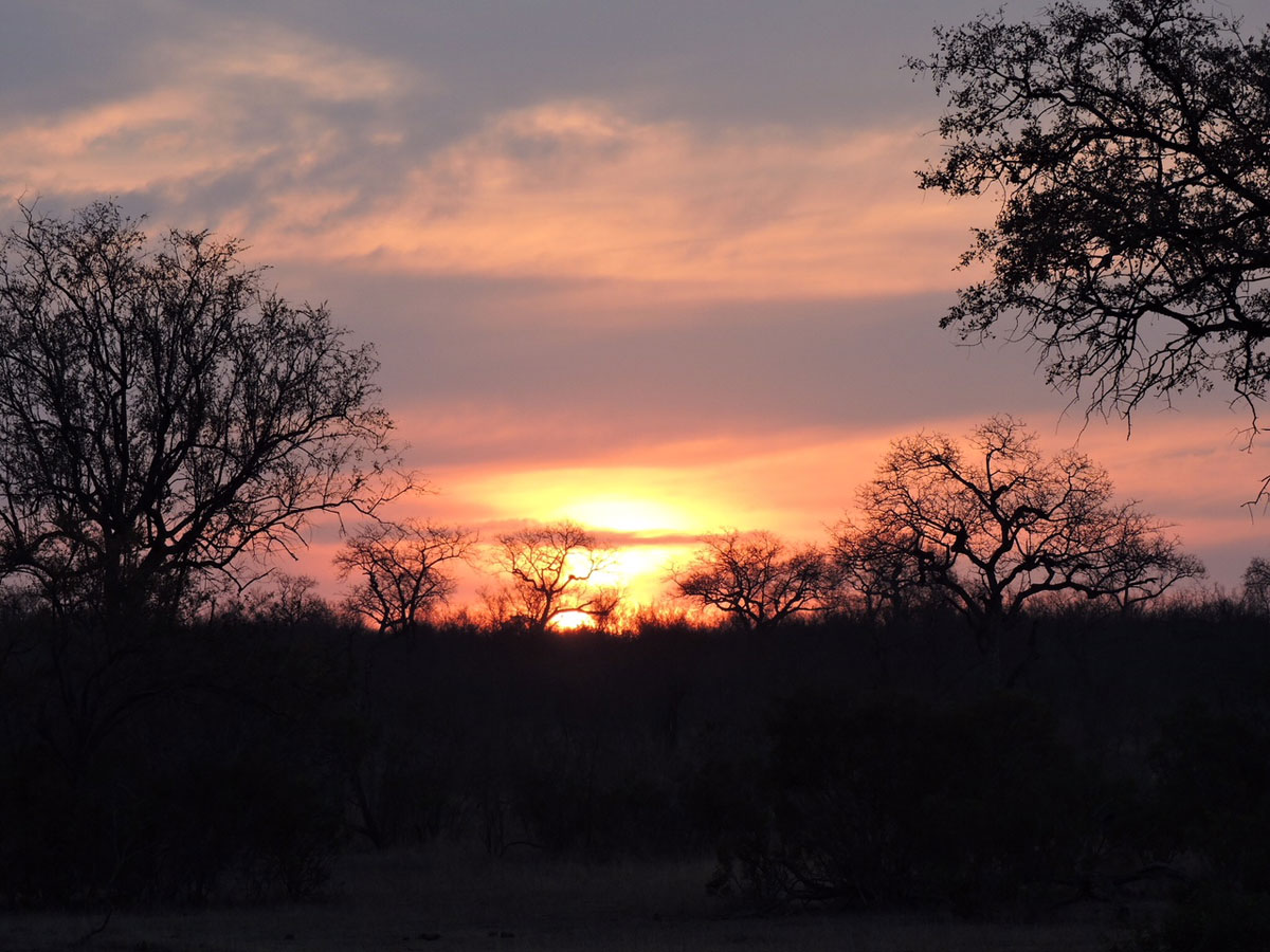 , Client Feedback : Bob and Family Spot the Big 5 in Kruger