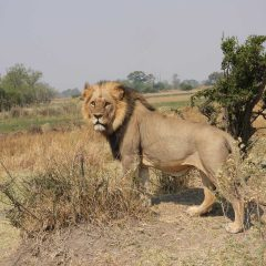 Client Feedback : Incredible Detailed Journey into Botswana and KwaZulu Natal