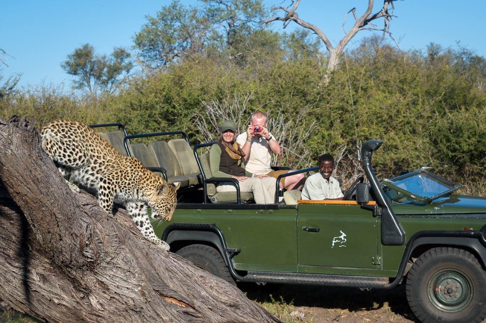 Game drive sightings in the Delta with Tubu Tree Camp