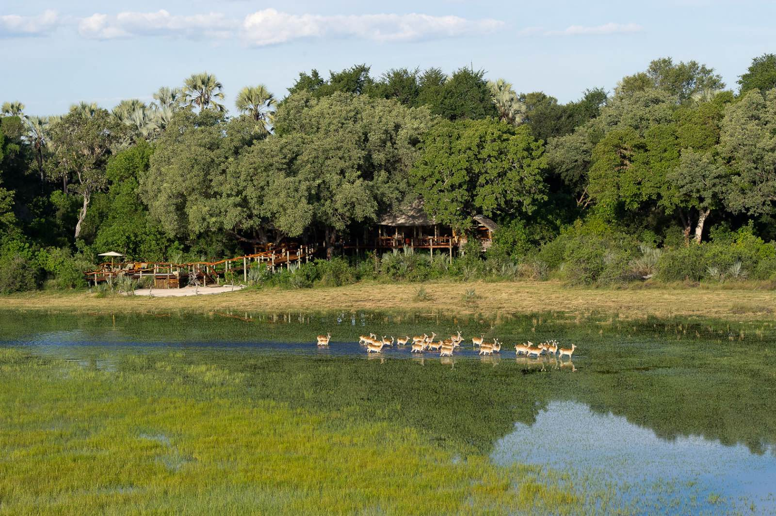 Idyllic location in the trees of Hundu Island in the Delta at Tubu Tree Camp with lechwe in the foreground