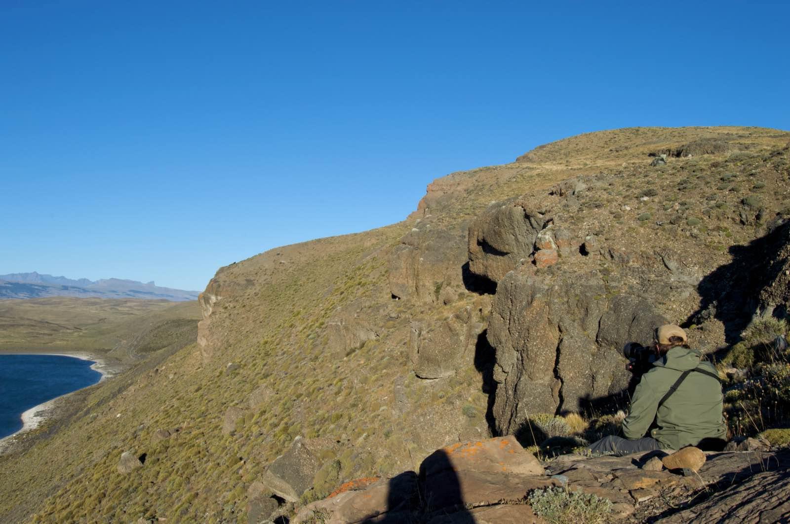 Puma tracking, Laguna Amarga, Torres del Paine