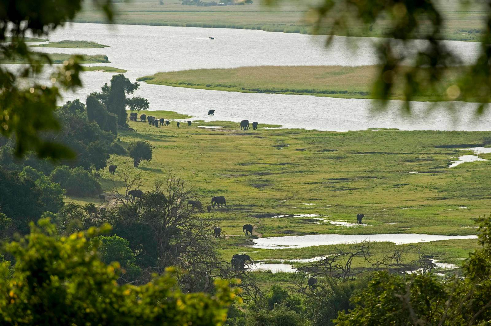 View through the trees from Chobe Chilwero down to the river and wildlife below
