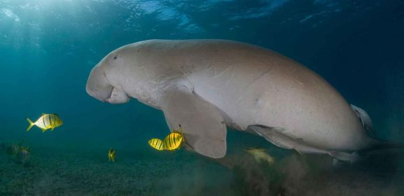 Marine Life to Spot While on an Ocean Safari in Mozambique