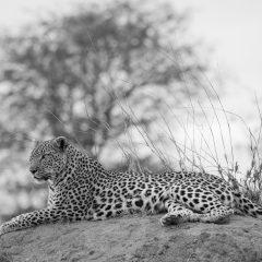 What are the Big Five on Safari?