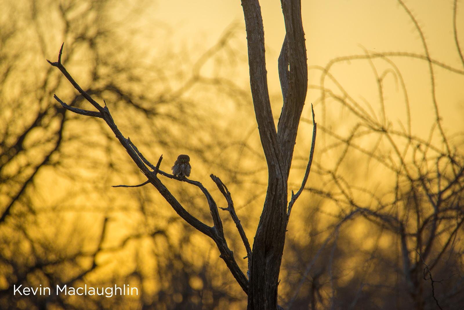 Owl in winter