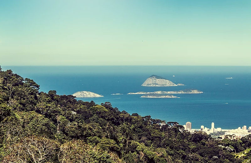 Brazil Nature Reserve - 5 things to do in Rio de Janeiro