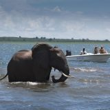 3 Regions Ideal for a Game-Rich Zimbabwe Safari