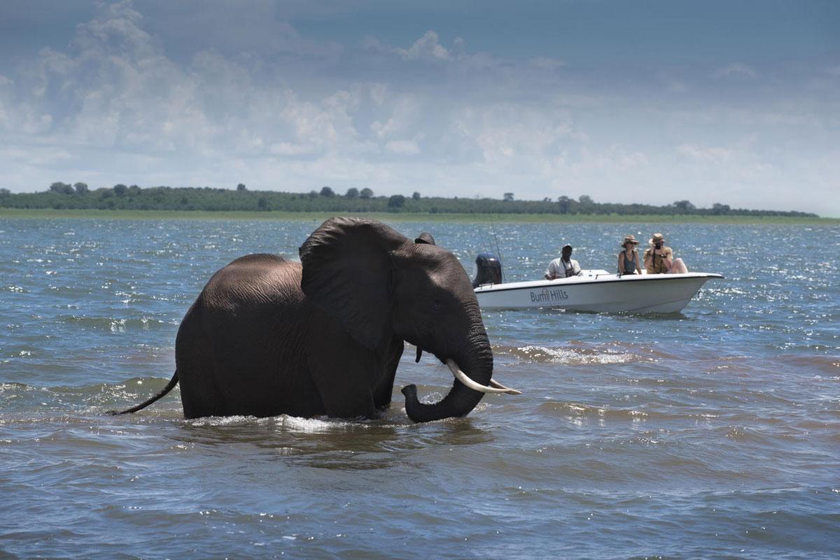 Bumi Hills Elephant in Kariba