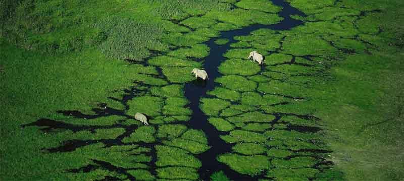 Meru National Park Elephants