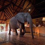 Client Feedback : A Safari Proposal