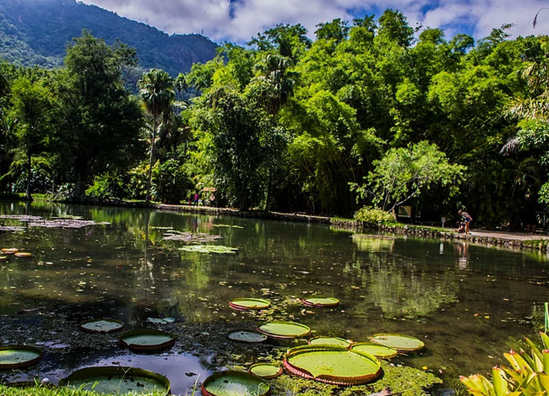 Tijuca National Park, Rio's Tijuca National Park: Explore the World's Largest Urban Forest