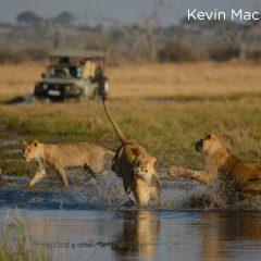 5 Types of Safari Experiences to Explore in 2019