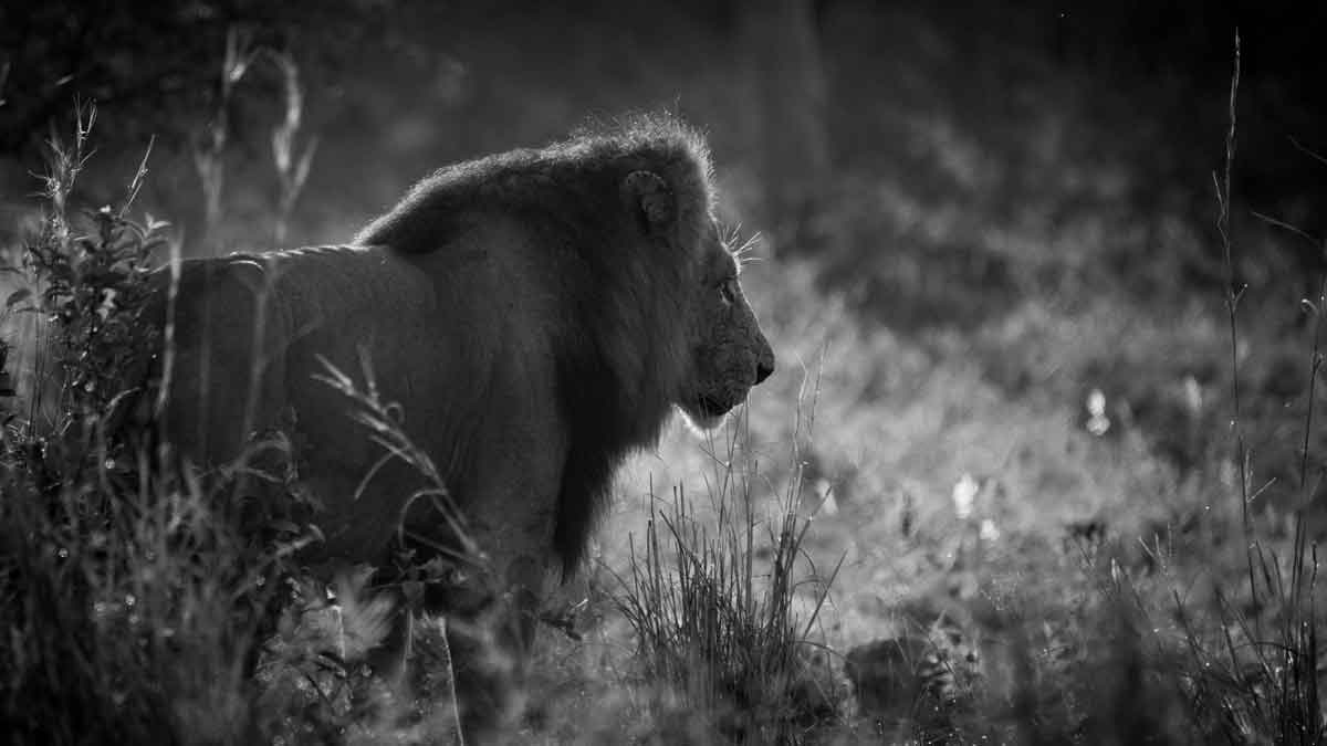 Kruger Lions - Kevin MacLaughlin