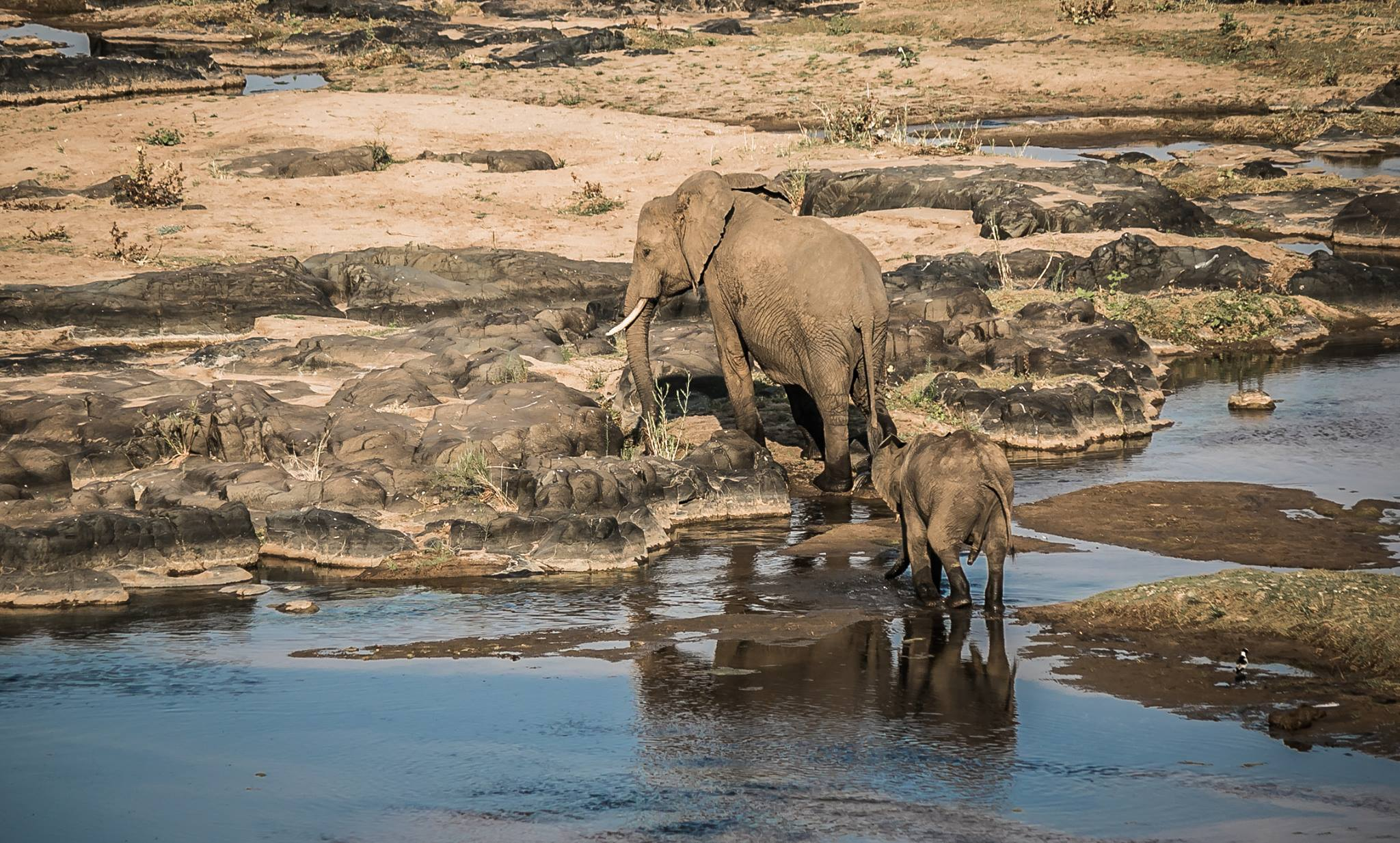 Elephants in the Olifants