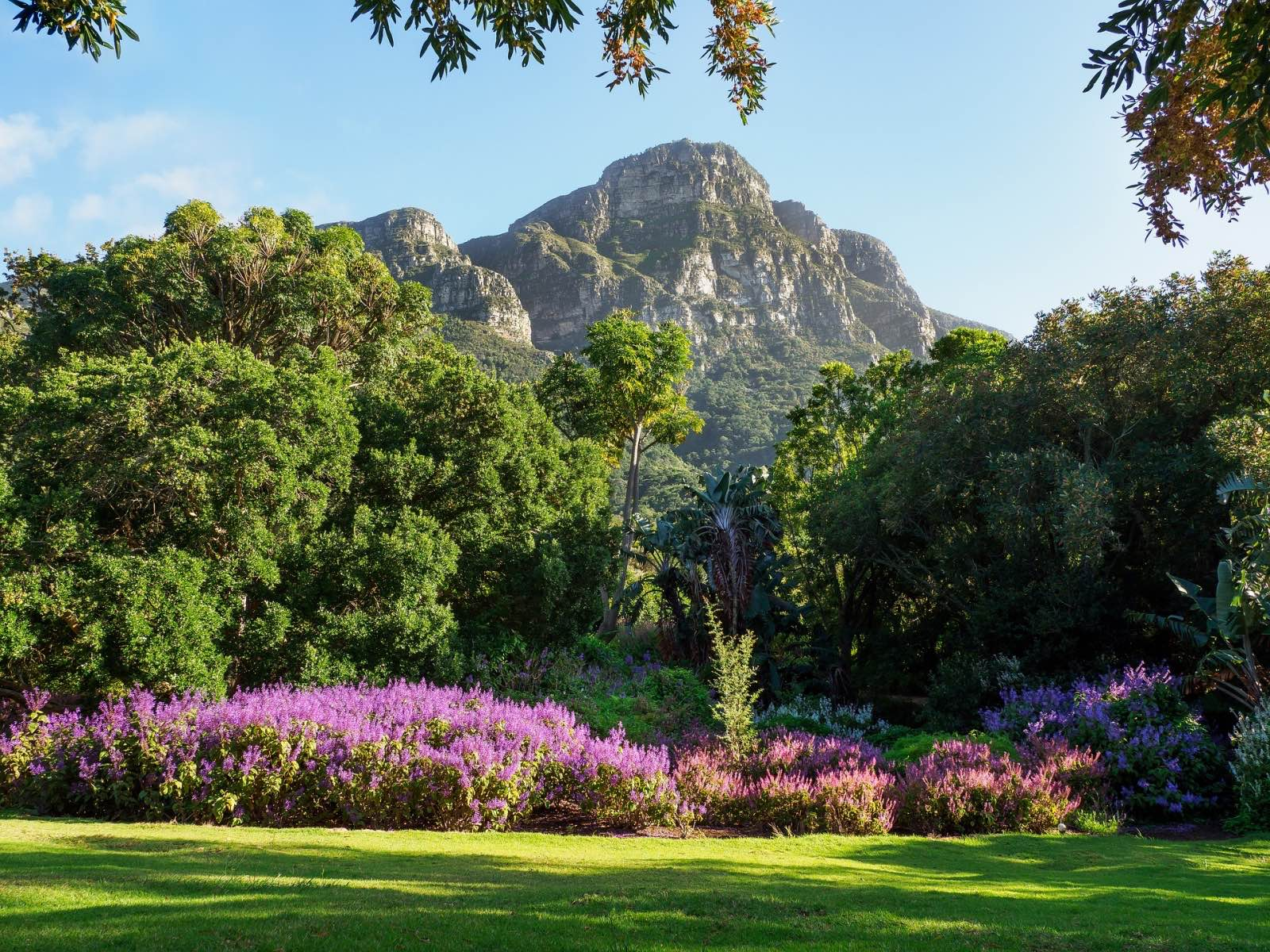 Kirstenbosch National Botanical Garden offering one of the best flower experiences in the world
