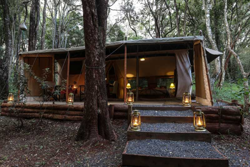 Nairobi Tented Camp in Forest