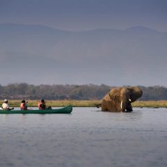 Canoeing Wild on the Zambezi River