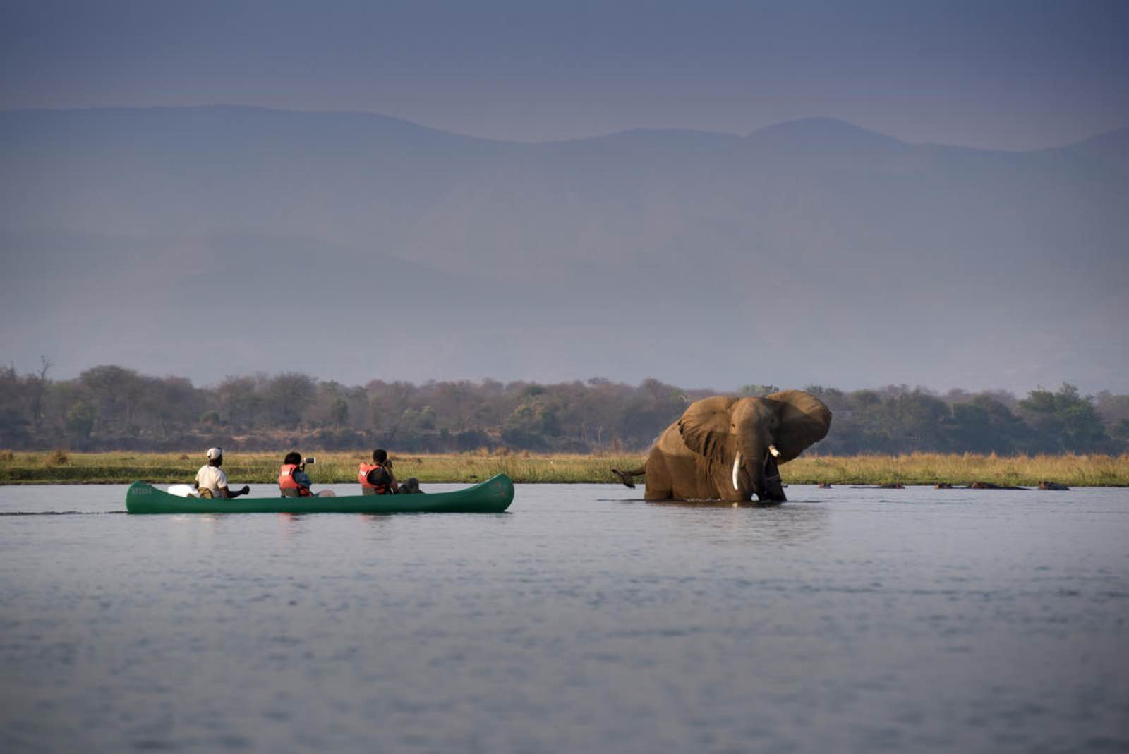 Nyamatusi elephants on a canoe