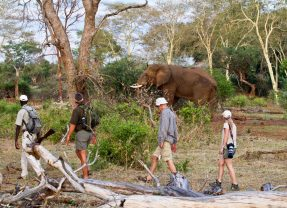 Three different Kruger Park Walking Trails to suit adventurous safari goers