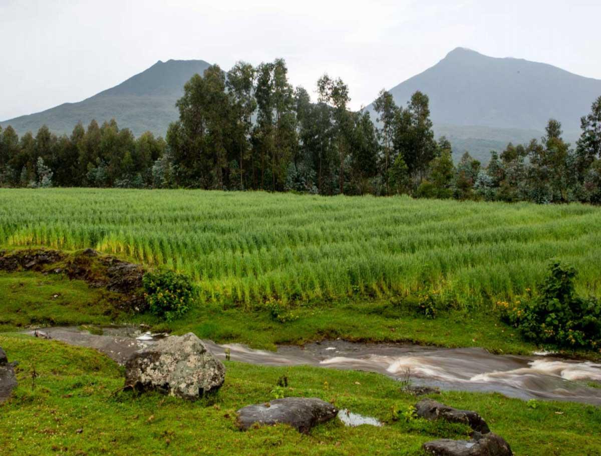 Rwanda Mountains Singita